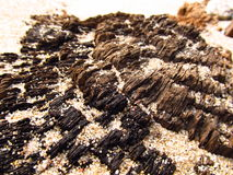 Holz und Sand Stockbild