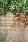 Holz- und Tannenzweighintergrund Lizenzfreies Stockbild