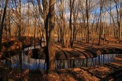 Holz und Wasser Lizenzfreie Stockfotografie