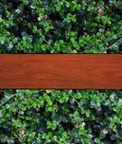 Holz verlässt Hintergrund stockfotos