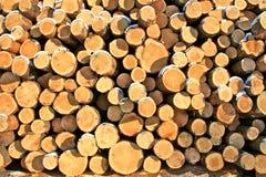 Holz verringert im ivalo Lappland Stockbilder