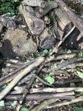 Holz vom Wald Stockfotografie