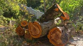Holz von den Obstbäumen zum Räucherhaus stock footage