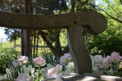 Holzbank in einem Tulpengarten Lizenzfreies Stockfoto
