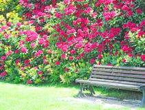 Holzbank im Park und im roten Rhododendron Stockfotografie