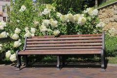 Holzbank und weiße Hortensie Stockfoto