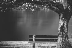Holzbank unter blühendem Baum Stockfotografie
