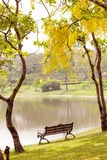 Holzbank unter dem Baum Stockfotografie