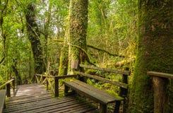 Holzbank zwischen großem Baum Stockbilder
