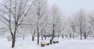Holzbanken im Schnee stock footage