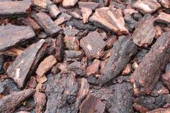 Holzbaum Stockfoto