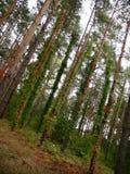Holzblatttapeten-Hintergrundbäume Stockbild