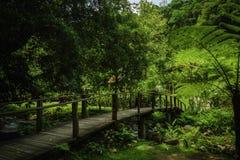 Holzbrücke über dem Regenwald in Südostasien Stockfotos