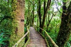 Holzbrücke an angka Naturlehrpfad in doi inthanon Nationalpark stockbild