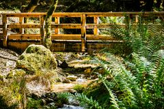 Holzbrücke auf Kataraktspur in Wasserscheide Mt Tamalpais, Marin County, Nord-San- Francisco Baybereich, Kalifornien lizenzfreie stockfotografie