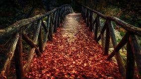 Holzbrücke bedeckt mit Herbstlaub Stockfotografie