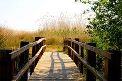 Holzbrücke in einem Sumpf lizenzfreie stockfotos