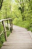 Holzbrücke in einem Waldhölzernen Gehweg im grünen Wald nahe dem Ropotamo-Fluss, Bulgarien Stockbilder