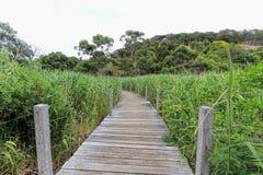 Holzbrücke im Adelaide-Reservewald Stockfoto