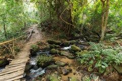 Holzbrücke im Dschungel Stockbild