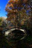 Holzbrücke im goldenen Herbst des Birkenholzes lizenzfreies stockbild