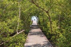 Holzbrücke im Mangrovenwald stockbilder