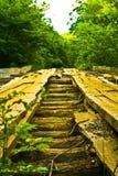 Holzbrücke im Wald Stockfotografie