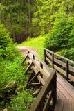 Holzbrücke im Wald Nationalparks Durmitor in Montenegro Stockfotos