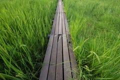 Holzbrücke mit 100 Jährigen zwischen Reisfeld bei Nakhon Ratchasi Lizenzfreie Stockfotos
