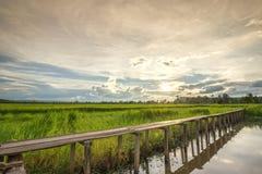 Holzbrücke mit 100 Jährigen zwischen Reisfeld mit Sonnenlicht Lizenzfreie Stockbilder