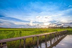 Holzbrücke mit 100 Jährigen zwischen Reisfeld mit Sonnenlicht an N Lizenzfreie Stockfotografie