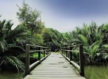 Holzbrücke und Dschungel oder Park in Bankok, Thailand stockbild