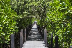 Holzbrückegehweg im Mangrovennaturlehrpfad stockfotografie
