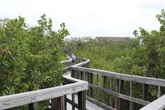 Holzbr?ckef?hrung zum Dschungel H?lzerne Spuren promenade Ein Dock ?ber dem Wasser an den indischen Felsen setzen Landschaftsschu lizenzfreie stockbilder