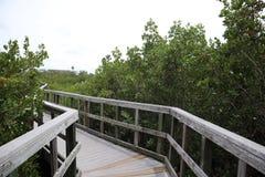 Holzbr?ckef?hrung zum Dschungel H?lzerne Spuren promenade Ein Dock ?ber dem Wasser an den indischen Felsen setzen Landschaftsschu stockbilder