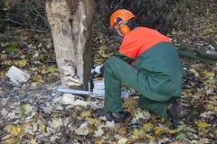 Holzfäller bei der Arbeit Stockfotografie