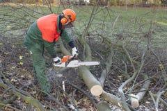 Holzfäller bei der Arbeit Lizenzfreie Stockbilder