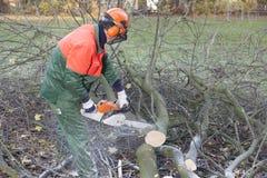 Holzfäller bei der Arbeit Stockbilder