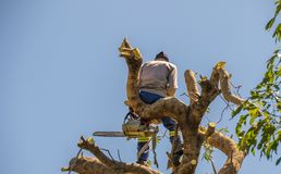 Holzfäller bei der Arbeit an der Spitze eines Baums stockbild