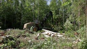 Holzfäller Buncher sägt einen frisch gehackten Baumstamm stock footage