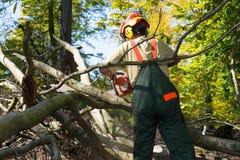 Holzfäller, der gegen Unterholz im Wald kämpft Lizenzfreie Stockfotografie