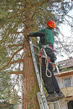 Holzfäller, der oben eine Leiter klettert Stockbild