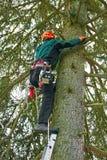 Holzfäller, der oben einen Baum klettert Lizenzfreie Stockfotos