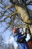 Holzfäller in der Tätigkeit Stockfotos