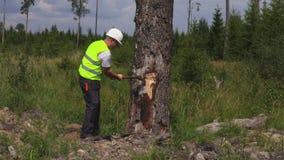 Holzfäller mit Axt nahe Baum stock video