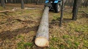 Holzfäller mit der modernen Erntemaschine, die in einem Waldholz als Quellerneuerbare energie arbeitet stock footage