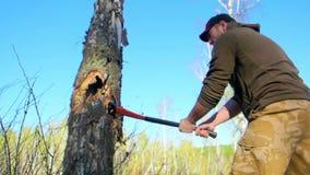 Holzfällerarbeitskraft, die hinunter einen Baum abbricht viele Splitter im Wald mit großer Axt hackt Starker gesunder Erwachsener stock video