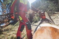 Holzfäller, der einen Baum im Wald schneidet und misst Lizenzfreie Stockfotografie