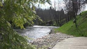 Holzhaus auf Flussufer Wacholderbuschbaum-Zweigbewegung im Wind 4K stock video