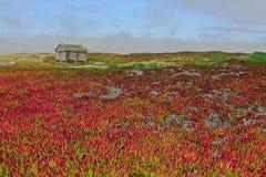 Holzhaus, das auf einem Gebiet von roten Blumen steht Stockfotos